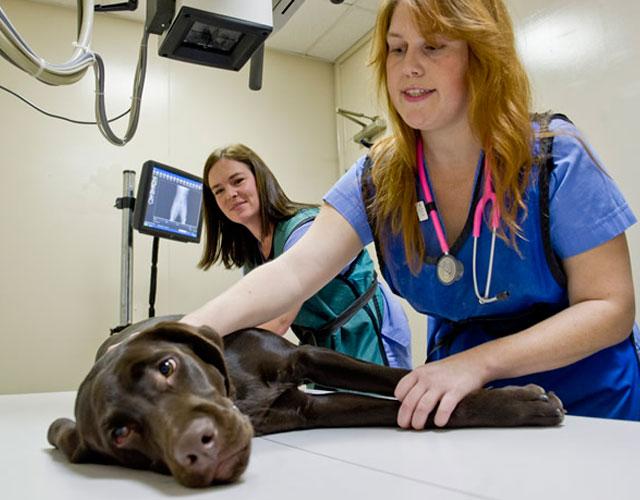 consejos-para-elegir-un-buen-veterinario