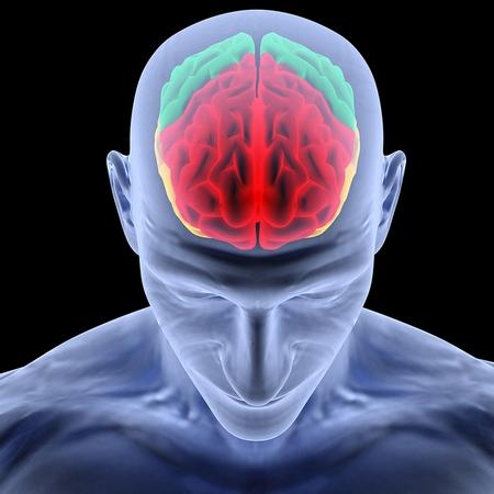 datos-sobre-el-cerebro